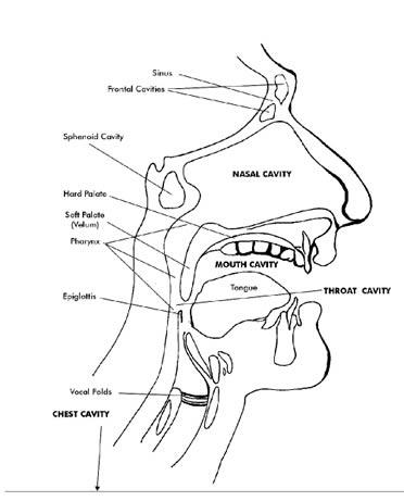 Diagram Singing Diagram Free Electrical Wiring Diagram Norma Young